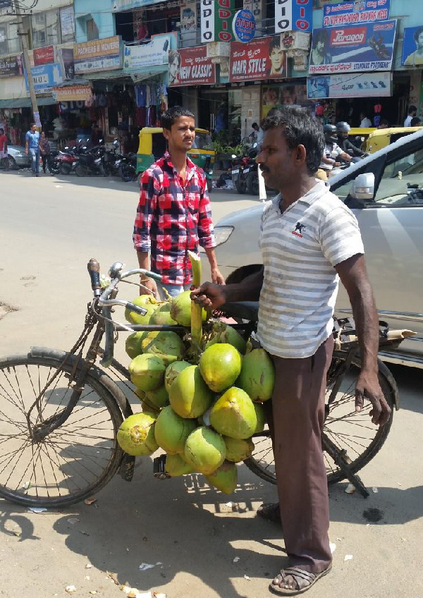 street vendor in India carrying coconuts